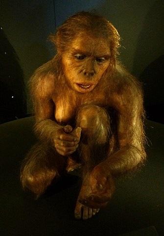 נקבת הומו הביליס מלפני 1.9 מיליון שנה משתמשת בידיה לייצור כלים. קרדיט: E. Daynes