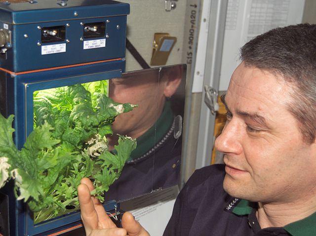 שרידות זרעים בחלל וההצלחה לגדל צמחים היא תנאי בסיסי לקיום אנושי בחלל | NASA