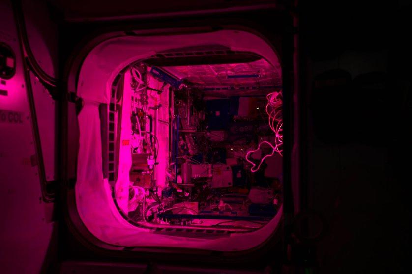 תאורה ורודה לצורך ניסוי בגידול צמחים בתחנת החלל הבינלאומית | NASA