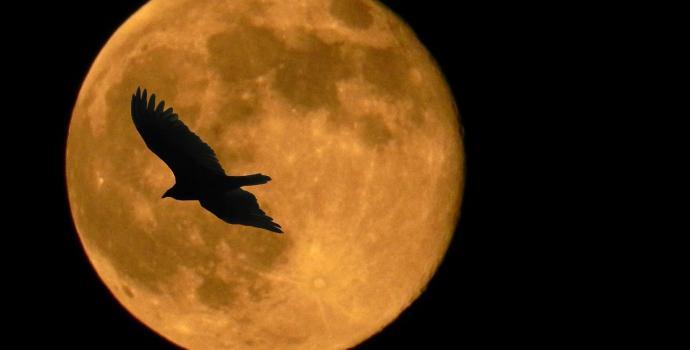 קרבתו של הירח מזכירה לנו עד כמה מסלולו חריג
