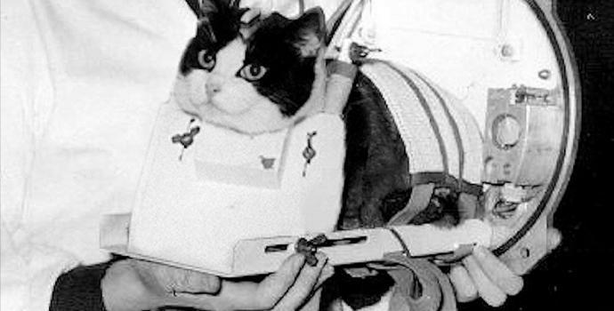 עושים כבוד לחתולת החלל