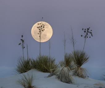 ירח באופק המדברי